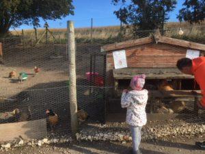 humble bee farm egg collecting