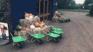 spilmans halloween festival, pick pumpkins