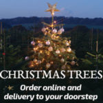 stockeld christmas trees online for delivery across east yorkshire