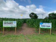 boston farm park maze near doncaster maize maze open this summer